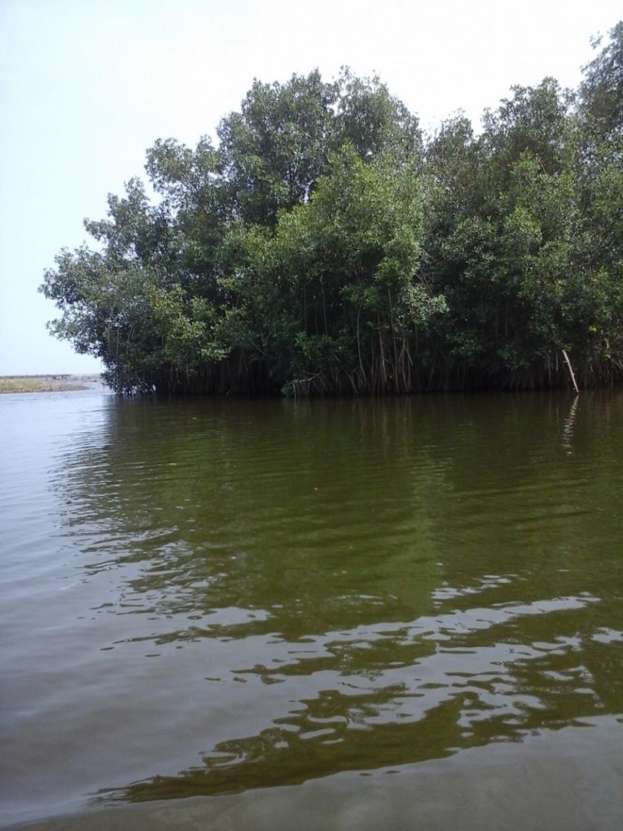 Palétuviers sur le fleuve de Sô-Ava