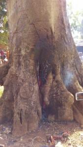 observer la braise et la fumée qui se dégage du tronc d'arbre